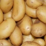 Kartoffeln Drillinge